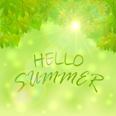 shinning leaves: Natural background with green leaves, shinning Sun and inscription Hello Summer, illustration.