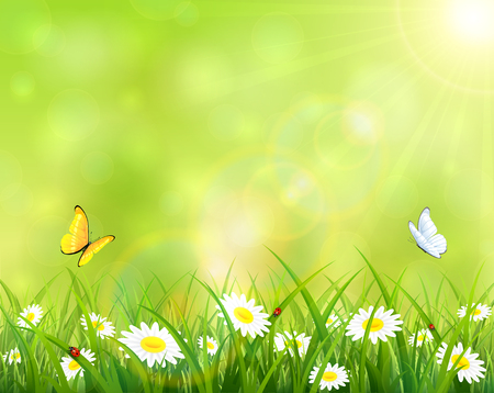 butterfly background: Sunny summer day, butterflies flying above the grass with flowers and ladybugs, illustration.