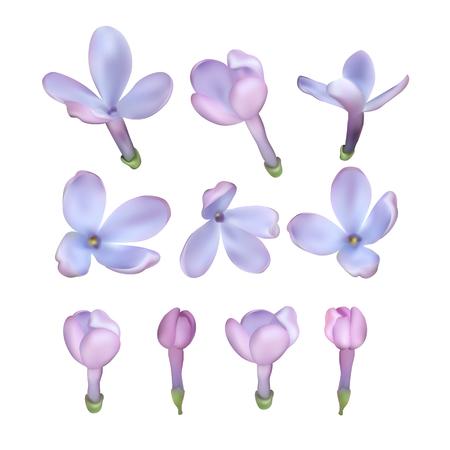 Conjunto de flores lila aisladas sobre fondo blanco, ilustración.