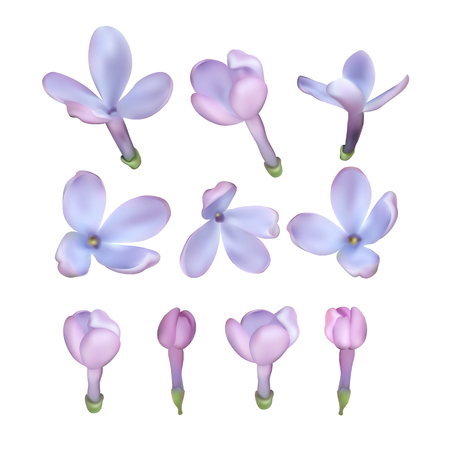 Set of Lilac flowers isolated on white background, illustration.