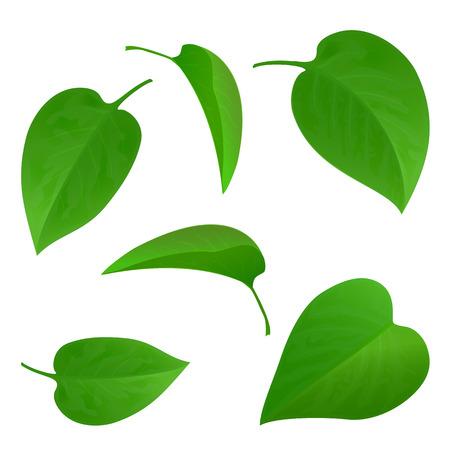 Conjunto de hojas verdes aisladas sobre fondo blanco, la recogida de la hoja verde natural, un conjunto de hojas de los árboles verdes, ilustración.
