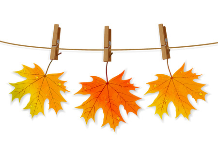 Set of orange maple leaves with water drops, and clothespins on a rope, isolated on white background, illustration.