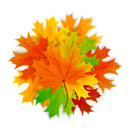 Set of colorful maple leaves isolated on white background, illustration. Illustration