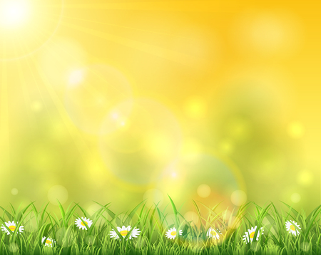 springtime: Spring or summer background, sunny day with flowers and grass, illustration. Illustration