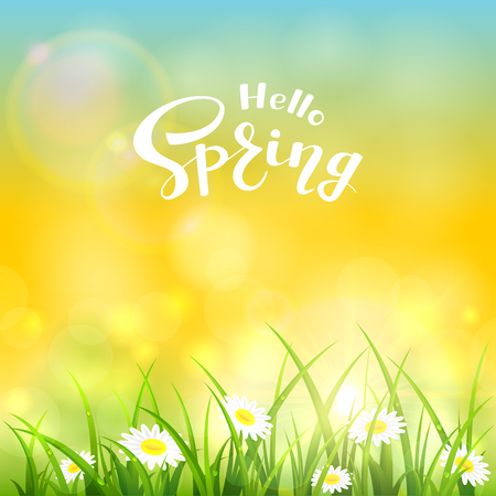 Grass with flowers and text Hello Spring on the yellow background of a shining sun, illustration.