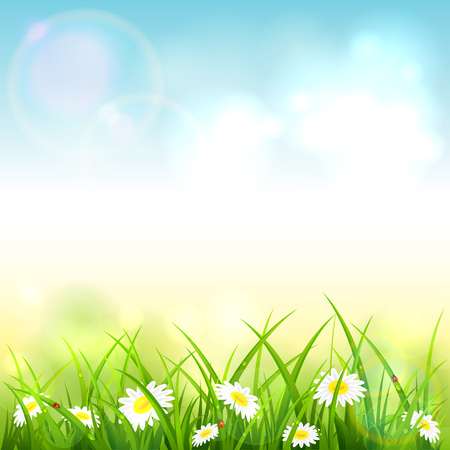 Spring or summer nature. Flowers and grass with drops and ladybugs on blue sky background, illustration.