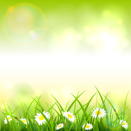 Spring or summer nature. Flowers and grass with drops and ladybugs on green background, illustration.