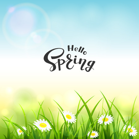 Spring or summer nature. Flowers and grass with drops. Lettering Hello Spring on blue sky background, illustration.