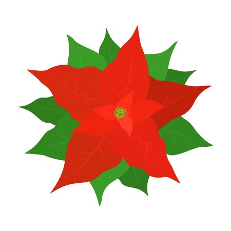 Red poinsettia for Christmas decorations. Holiday flower with green leaves isolated on white background. Illustration can be used for holiday design, cards, invitations, postcards and banners.