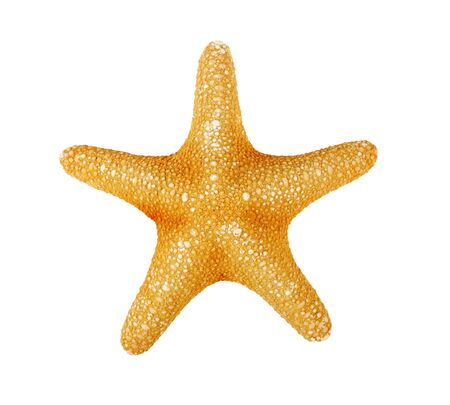 Starfish on a white background, isolate, top view