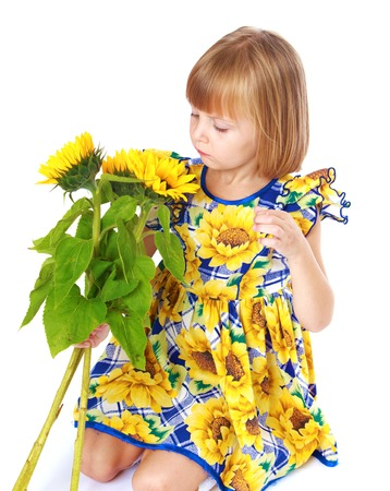 Beautiful little girl sees a beautiful yellow flower of a sunflower.Isolated on white background, Lotus Childrens Center. photo