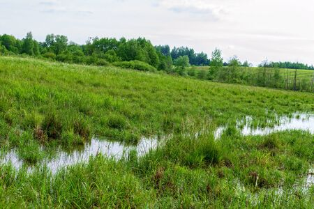View of the picturesque marsh in the summer.