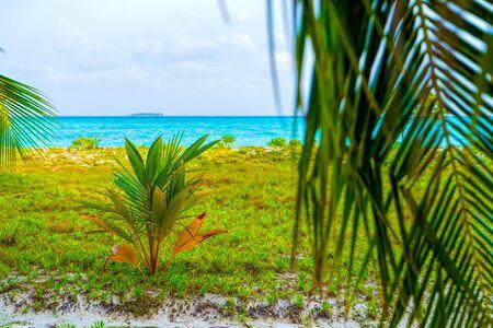 Lush, green leaves of a bush among luxurious palm trees, Maldive