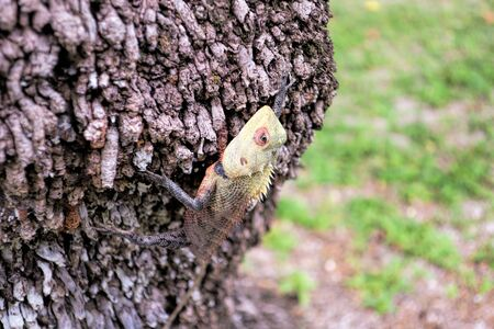 A beautiful multi-colored lizard creeps on a tree. She basks in Foto de archivo - 133517618