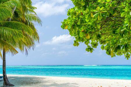 Widok na ładną tropikalną plażę z kilkoma palmami? Zdjęcie Seryjne