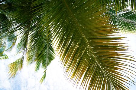 Beach summer vacation holidays background with coconut palm tree