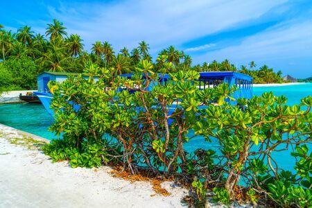 Lush, green leaves of a bush among luxurious palm trees, Maldives. Standard-Bild