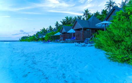 Lush, green leaves of a bush among luxurious palm trees, Maldives. Фото со стока