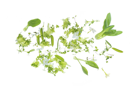 green herbs flying on a white background 写真素材