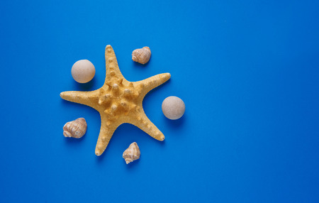 Summer holidays. Starfish, seashells on a blue background. Summer concept. Flat lay, top view, copy space