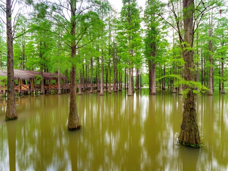 trees surrounded with water 스톡 콘텐츠