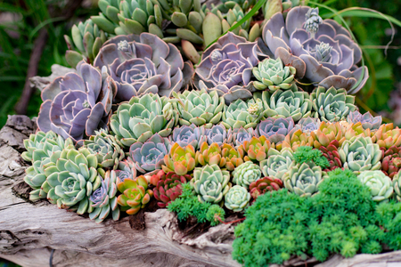 Succulents potted plant 版權商用圖片 - 114661541