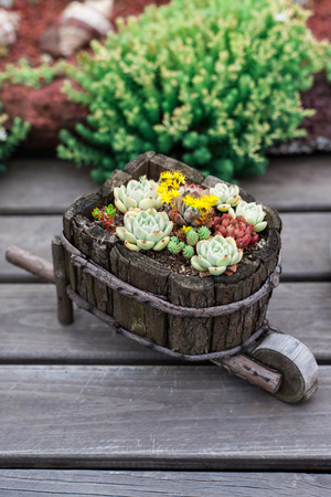 Succulents potted plantup 스톡 콘텐츠 - 114661546