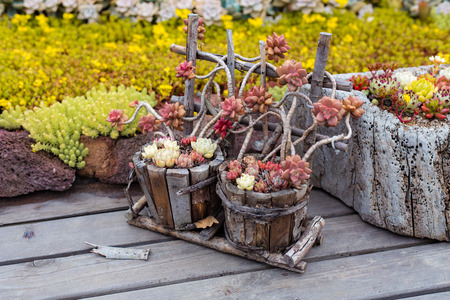 Succulents potted plant 스톡 콘텐츠