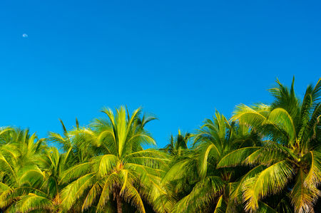 Sanya's blue sky and coconut trees