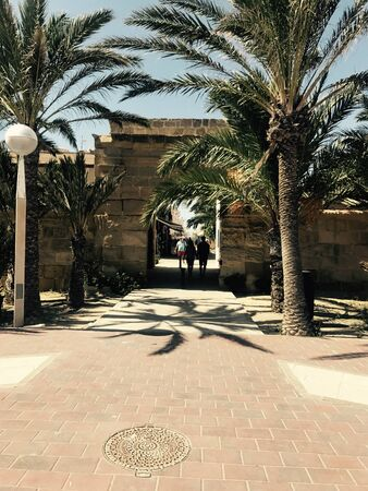 a gate surrounded by palm trees Stok Fotoğraf