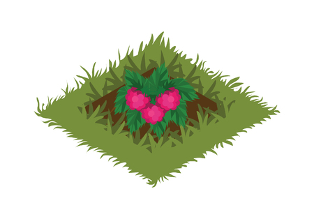 Isometric Cartoon Fruit Garden Bed Planted with Raspberry Bush - Elements for Tileset Map, Landscape Design or Game Object in Colorful Detailed Vector