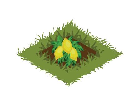 Isometric Cartoon Fruit Garden Bed Planted with Lemon Tree