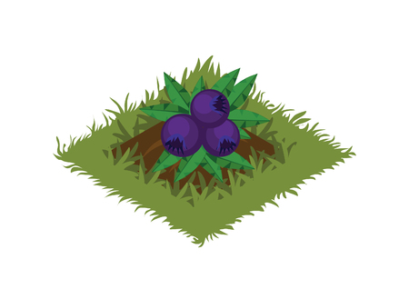 Isometric Cartoon Fruit Garden Bed Planted with Berry Bush