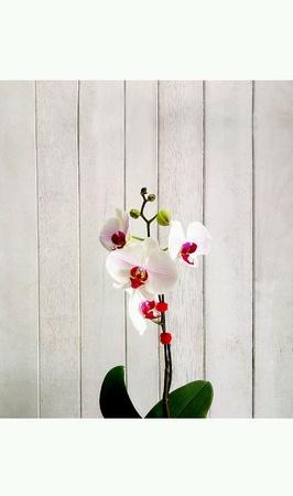 아름다운 흰색과 분홍색 난초입니다. 스톡 콘텐츠