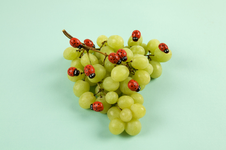 Invasion of ladybugs on a bunch of grapes. Vibrant color turquoise or violet background. Minimal design still life photography.