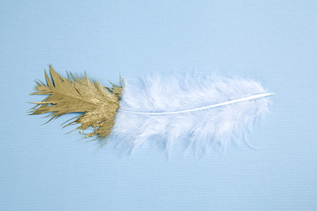 a white feather painted over half of its length. Pastel blue background. Minimal color still life photography 版權商用圖片