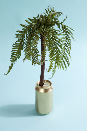 A palm tree growing in a golden can. Minimal and funny color still life photography