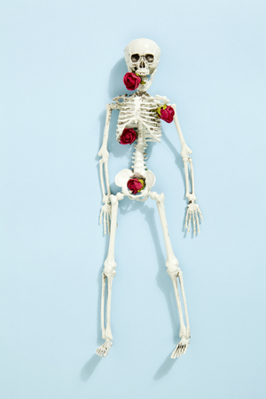 Isolated plastic toy skeleton with red roses between bones on a vibrant pop blue turquoise background. Minimal color still life photography Stock Photo