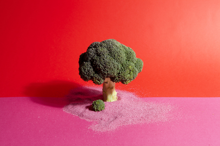 a broccoli standing on a pink and red background with sand arround it. Metaphor of a tree. Minimal color still life photography Stock Photo