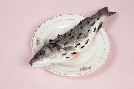A bass fish with rosebush, thorns in a flower plate hidden on a vibrant pink background. Game and diversion. Minimal color still life photography.