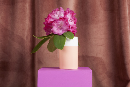 bicolor vase with flowers pink rhododendron inside on a pink coloured cube. Minimal still life color photography Stock Photo