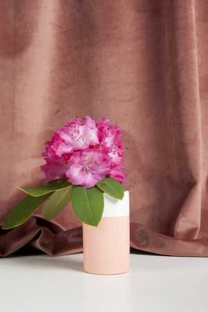 bicolor vase with flowers pink rhododendron in front of a pink velvet curtain. Minimal still life color photography