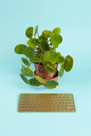 a golden bluetooth keyboard used as a remote control for a pilea peperomioid plant placed in front of it, instead of the computer screen, on a plain turquoise background. Minimal still life color phot 写真素材