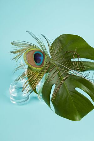 a peacock feather mixed with a monstera deliciosa plant on a turquoise background. Minimal color still life photography
