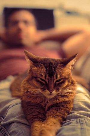 rudy: Cute domestic cat falling asleep on his owners legs at dawn.