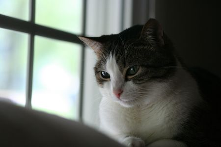 A tabby cat sitting by a window photo