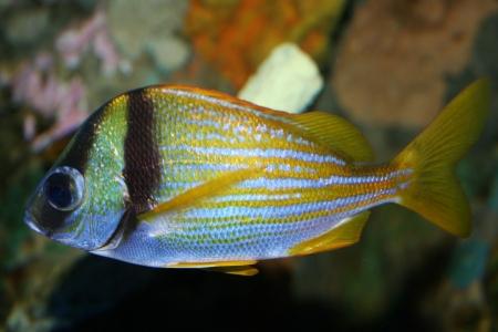 pebles: A bright fish Stock Photo