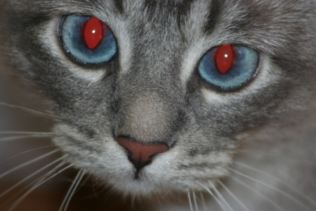 A cat with firey red eyes Stock Photo - 2379337