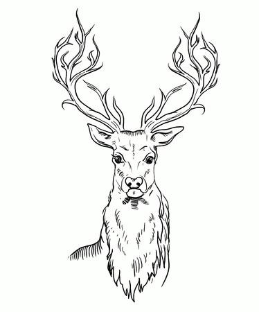 stag horn: Sketch of deer head.