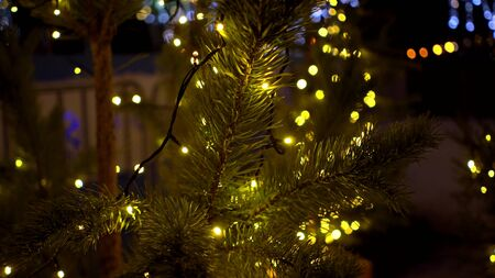 Small Christmas trees decorated with yellow luminous garlands near the ice rink at the Christmas market with blur Outdoor